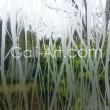 Film vitre Branche