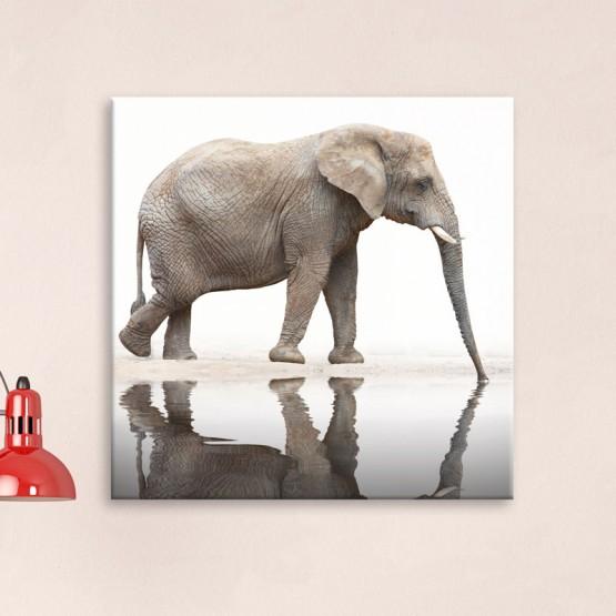 Tableau Elephant miroir