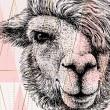 Tableau Portrait de Lama Tableaux Animaux Gali Art